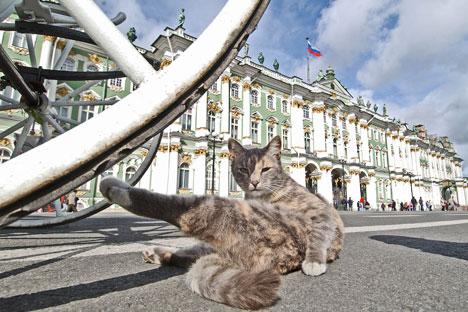 Kommersant_cat_468.jpg