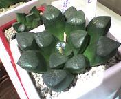 多肉植物2.jpg