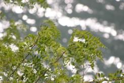 草木湖キラキラ.jpg