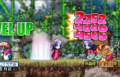 Maple0002e.jpg