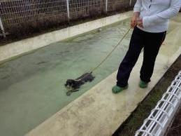 ウオッカ初泳ぎ1