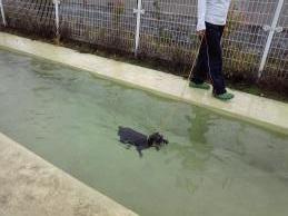 ウオッカ初泳ぎ