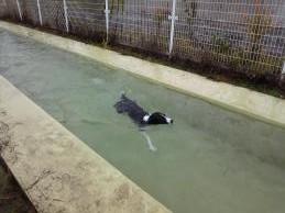 デジデジ初泳ぎ