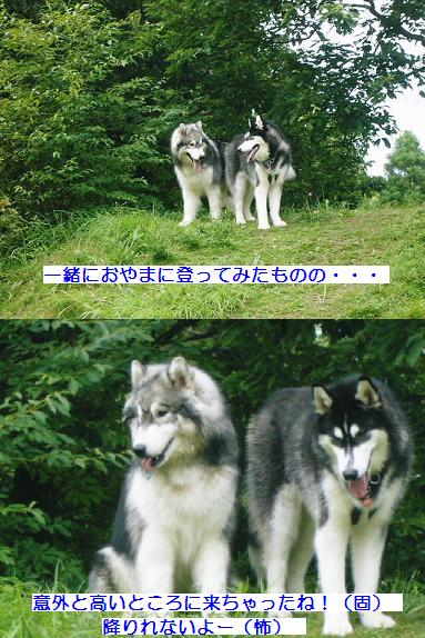 070701blog5.jpg