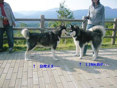 070924link.jpg