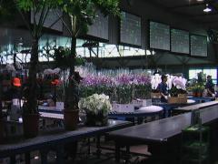福岡花市場(せり)