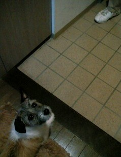 玄関でフセ・・・動いてもいい?
