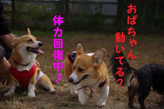あかりちゃん3
