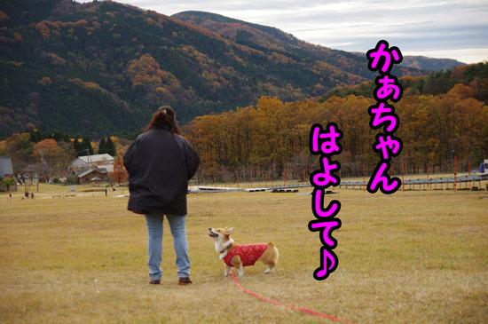 マキノ高原2
