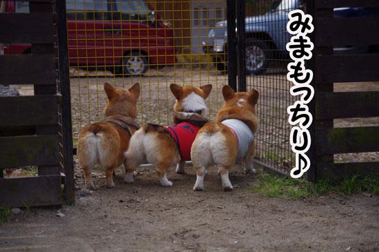 京都ハミルオ1