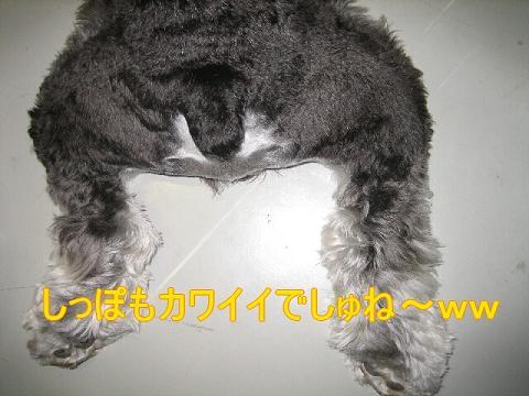 20070527152608.jpg