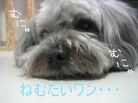 20070602181219.jpg