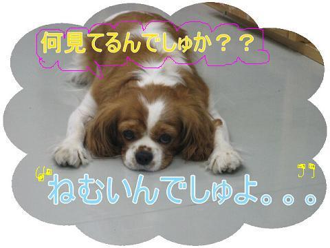 20070710142052.jpg