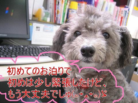 20070806114248.jpg