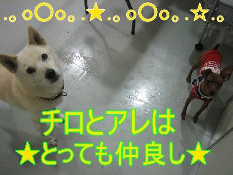 20071110184948.jpg
