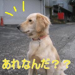 20071112132950.jpg