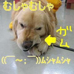 20071121095932.jpg