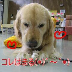 20071121095941.jpg