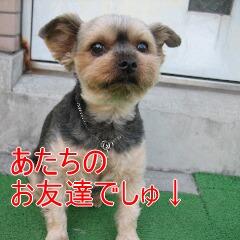 ちゃっぴー5