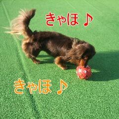 ちょこ太4