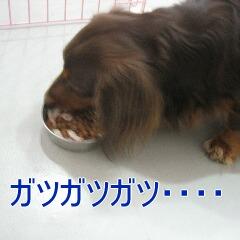 ちょこ太7
