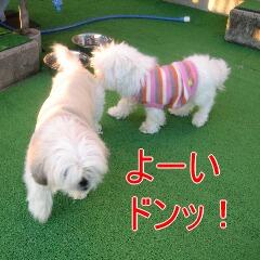 ファニー&マル4