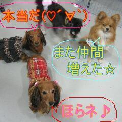 ちょこちっぷ2