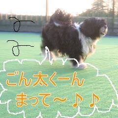 ティッピ6