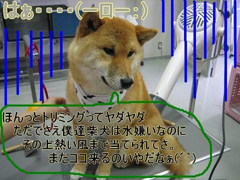 moko1.jpg