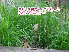 bokuhaya12.jpg
