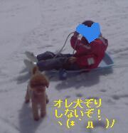 inuzori2.jpg