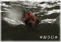 swim-al.jpg