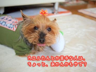 1_20110428210441.jpg