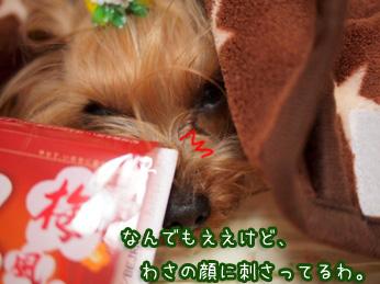 2_20110419204116.jpg