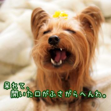 3_20110403142710.jpg