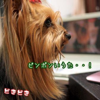 3_20110408103741.jpg