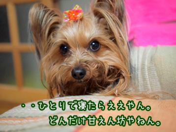 3_20110420134858.jpg