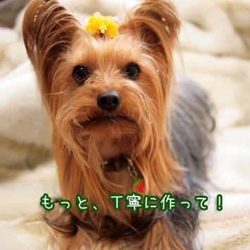 4_20110403142710.jpg