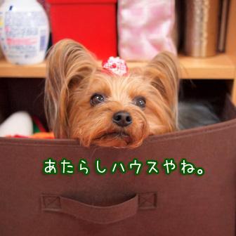 4_20110405201806.jpg