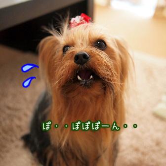 4_20110408103740.jpg