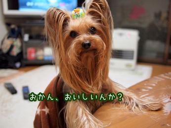 4_20110419204116.jpg