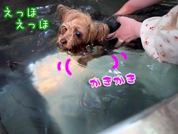 4_20110427133307.jpg
