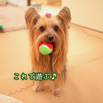 5_20110404200512.jpg