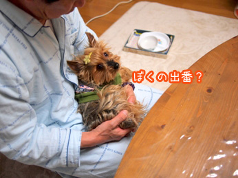 5_20110419204115.jpg