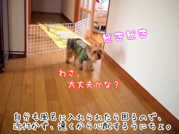 5_20110427133307.jpg