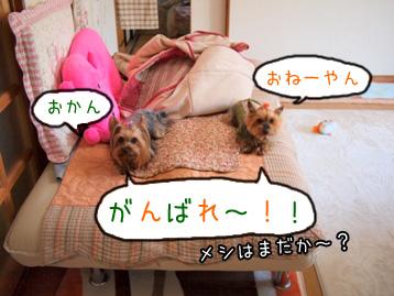 7_20110502195330.jpg