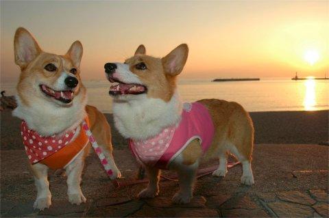 夕陽をバックに ハイ、笑って?!