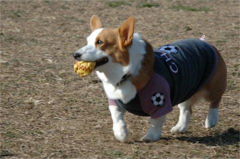チャコちゃんは、ピコボールに夢中です