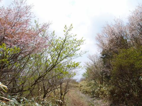 丸岳手前の尾根道
