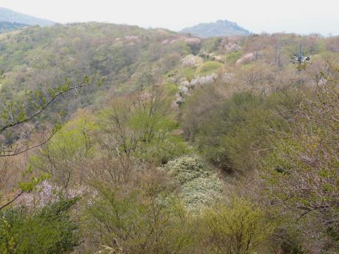 丸岳からの尾根道